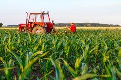 Mecanizado processando a grama entre fileiras no campo de milho Fotografia de Stock Royalty Free