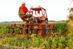 Mecanizado processando a grama entre fileiras no campo de milho Imagem de Stock