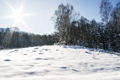 Mecanografíe adentro un claro en las montañas, invierno iluminado por el sol del bosque Imagen de archivo