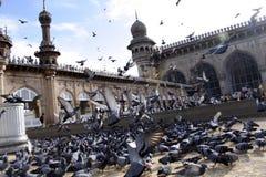 Mecca Masjid, Hyderabad. A pigeons feeding outside Mecca Masjid, Hyderabad stock photo