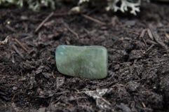 Mech agat na lasowej podłoga Zdjęcie Royalty Free