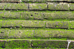 Mech dorośnięcie na brown ściana z cegieł Fotografia Stock