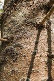 Mech dorośnięcie na Drzewnym bagażniku Obrazy Stock