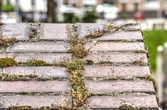 Mech i liszaj na ściana z cegieł zdjęcie royalty free