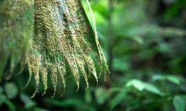 Mech i liszaj na wielkim dżungla liściu, Costa Rica zdjęcia royalty free