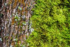 Mech i liszaj r na drzewnym bagażniku w nabrzeżnym tropikalnym lesie deszczowym zdjęcie royalty free