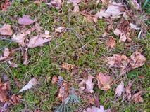 Mech i spadać liście na ziemi w lesie Obraz Royalty Free