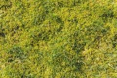 Mech i trawy tekstura Zdjęcie Stock