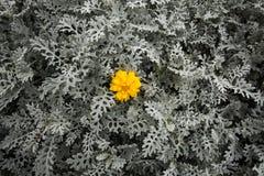 Mech kwiat i tło obraz royalty free