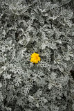 Mech kwiat i tło obrazy stock