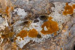 Mech, liszaj na kamieniu, abstrakt Zdjęcia Royalty Free