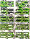 Mech na betonowej ścianie Fotografia Royalty Free