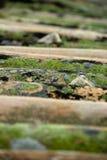 Mech na dachowych płytkach Zdjęcia Stock