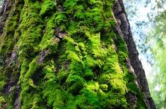Mech na drzewie Zdjęcia Royalty Free