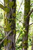 Mech na drzewie Obraz Royalty Free