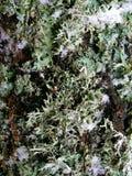 Mech na drzewnej barkentynie (1) Obrazy Royalty Free