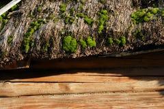 Mech na pokrywającym strzechą dachu stara beli buda Zdjęcie Royalty Free