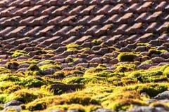 Mech na starym dachu Dachowe płytki przerastać z zielonym mech Mech na dachu Fotografia Stock