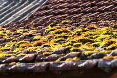 Mech na starym dachu Dachowe płytki przerastać z zielonym mech Mech na dachu Obraz Royalty Free