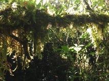 Mech narastający up w drzewie Należy grupa dzwoniąca Bryophyta sensu lato zdjęcia royalty free