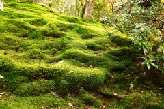 Mech ogród Ginkaku-ji zdjęcia royalty free