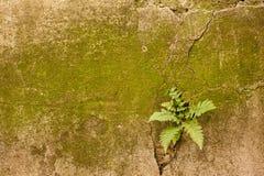 Mech paproci ściana zdjęcie stock