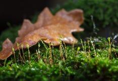 Mech po deszczu na lasowej podłoga obrazy stock
