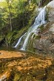Mech roztoki spadków liścia Vortex Zdjęcie Royalty Free