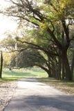 mech spanish drzewa obrazy royalty free