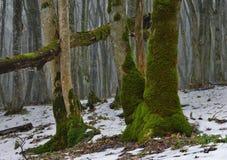 Mech w lesie Zdjęcie Royalty Free
