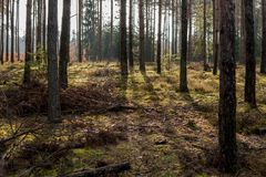 Mech w lesie podczas słonecznego dnia Fotografia Royalty Free