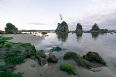 Mech zakrywać skały przy Oregon wybrzeżem zdjęcia royalty free