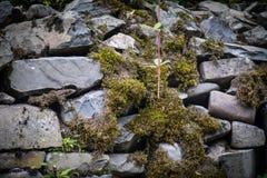 mech zakrywający kamień Piękny mech i liszaj zakrywający kamień Jaskrawy - zielony mech tło textured w naturze Naturalny mech dal obraz royalty free