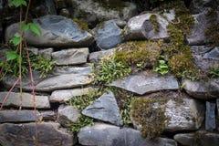 mech zakrywający kamień Piękny mech i liszaj zakrywający kamień Jaskrawy - zielony mech tło textured w naturze Naturalny mech dal obrazy royalty free
