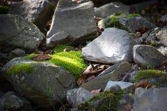 mech zakrywający kamień Piękny mech i liszaj zakrywający kamień Jaskrawy - zielony mech tło textured w naturze Naturalny mech dal fotografia royalty free