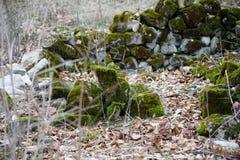 mech zakrywający kamień Piękny mech i liszaj zakrywający kamień Jaskrawy - zielony mech tło textured w naturze Naturalny mech na  obraz stock