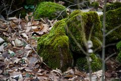 mech zakrywający kamień Piękny mech i liszaj zakrywający kamień Jaskrawy - zielony mech tło textured w naturze Naturalny mech na  obrazy stock