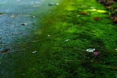 Mech zieleni tekstura Mech tło Zielony mech na grunge textur zdjęcie stock