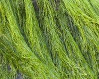 mech zielone skały zdjęcia royalty free