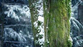 Mechaci Drzewni bagażniki Z Śnieżny Spadać zbiory