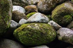 Mechaci kamienie w rzece w forrest zdjęcie stock