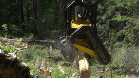 Mechanical arm cuts a freshly chopped tree trunk in a forest stock footage