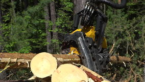Mechanical arm cuts a freshly chopped tree trunk in a forest stock video