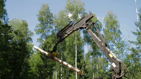 Mechanical Arm loads tree trunks in forest stock video