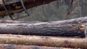 The mechanical arm of a specialized Bark Removing Machine strips the bark from a freshly chopped tree trunk in a forest stock video