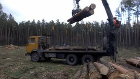 The mechanical arm of a specialized Bark Removing Machine strips the bark from a freshly chopped tree trunk in a forest stock footage