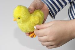 Mechanical chick in kids hands Stock Images