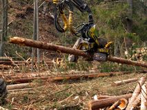 Mechanical cutting of trees in a forest Stock Image