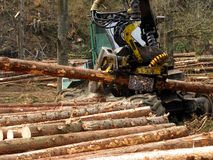 Mechanical cutting of trees in a forest Royalty Free Stock Images