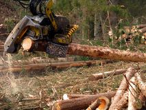 Mechanical cutting of trees in a forest Stock Photos